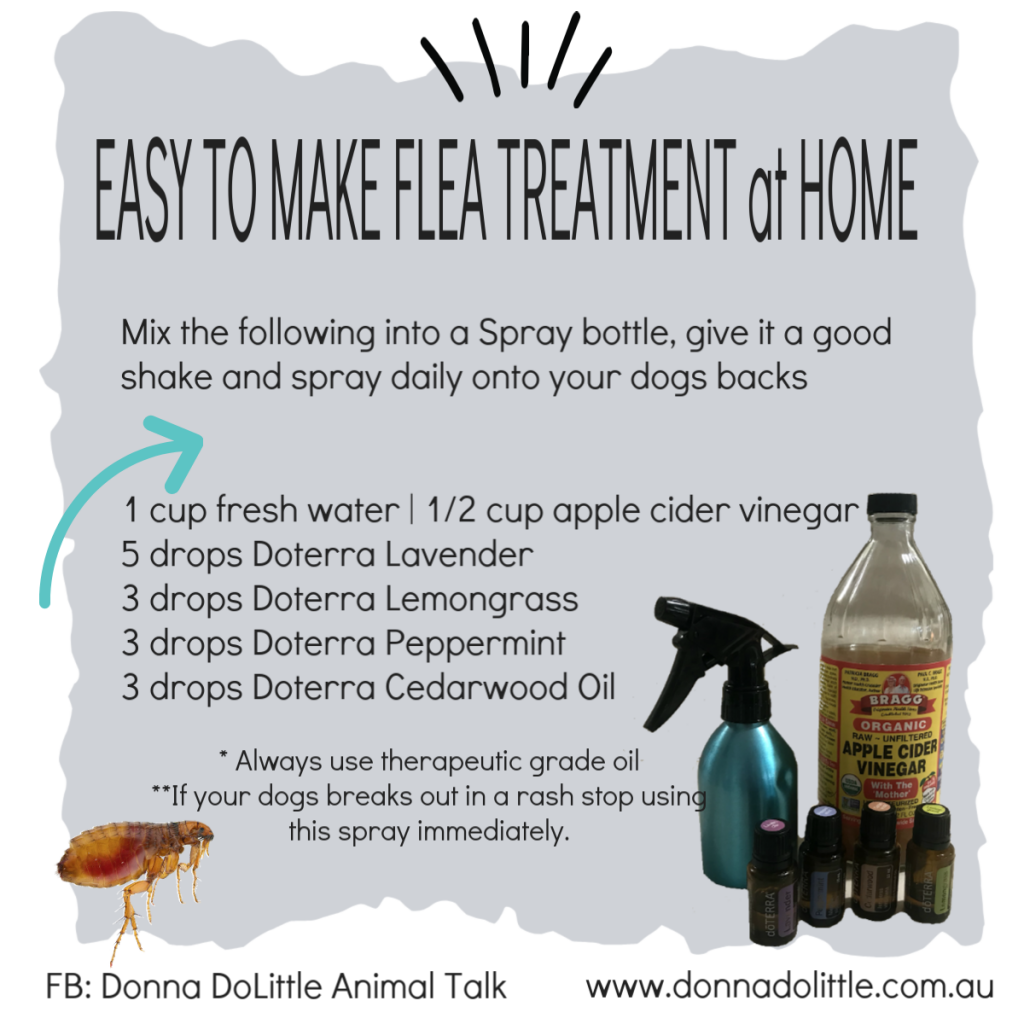 All Natural Flea Spray For Your Dogs
